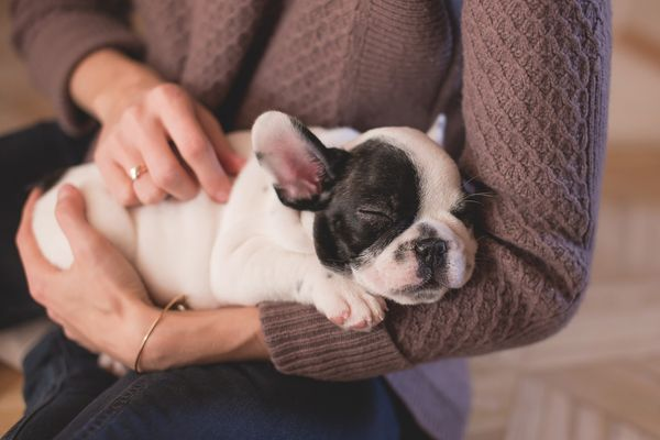 understanding the quantity and quality of puppies produced