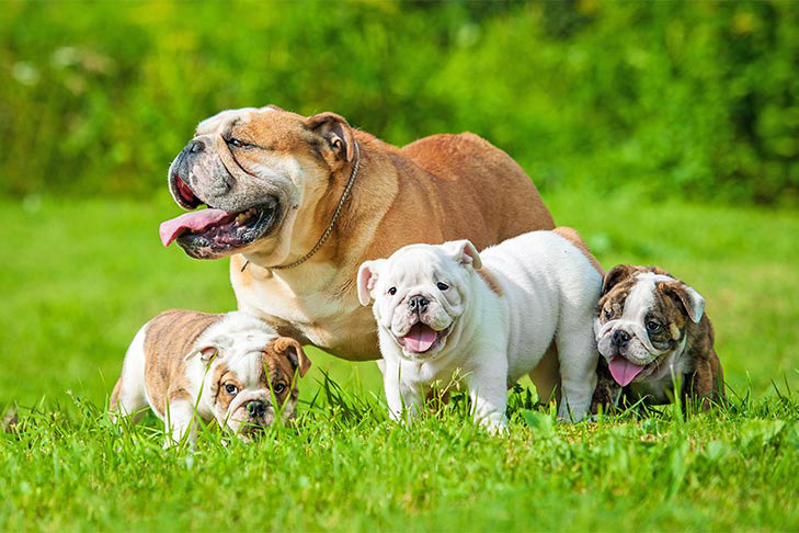 The American Kennel Club has noted larger litters in the spring than at any other times of the year.