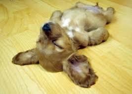 Dead puppy
