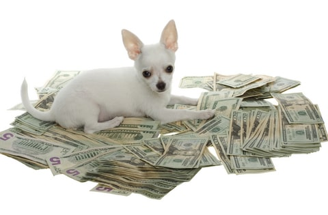 There are many expensive breeds of dogs.