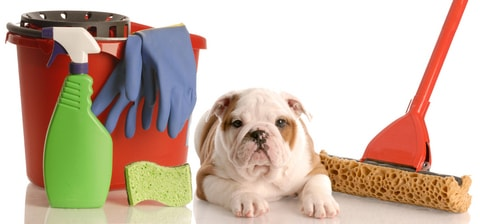 Cleanliness is important for all aspects of your puppies' and dam's health.