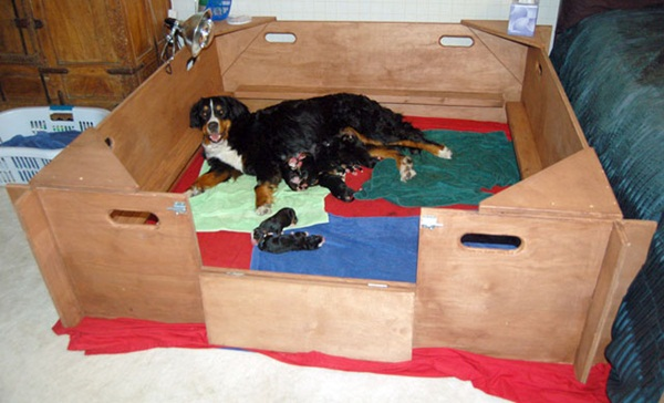 A whelping box is a safe den for your mom and her litter.
