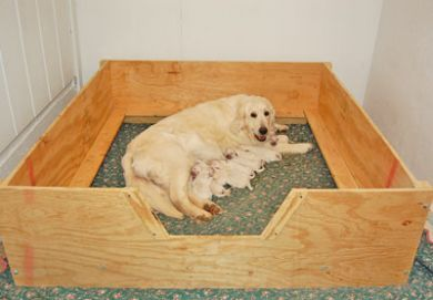 Make sure you use the right size that fits your large dog.