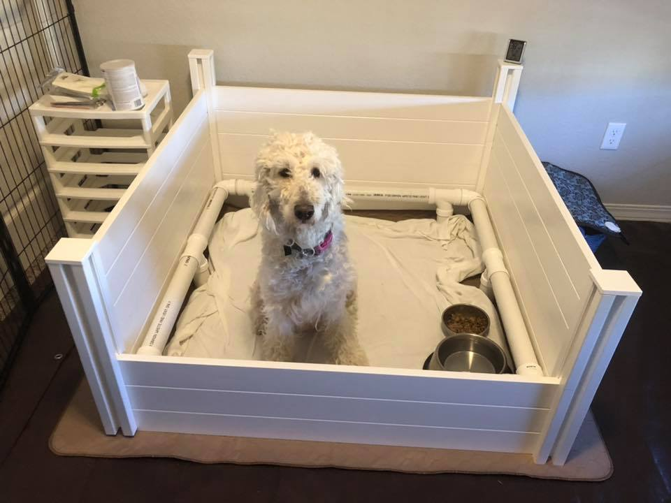 Garden beds make an excellent whelping box for large breed dogs.