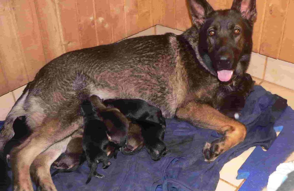 Your dam should be happy and calm with her new puppies.