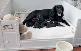 A clean whelping box keeps mom and puppies safe and healthy.