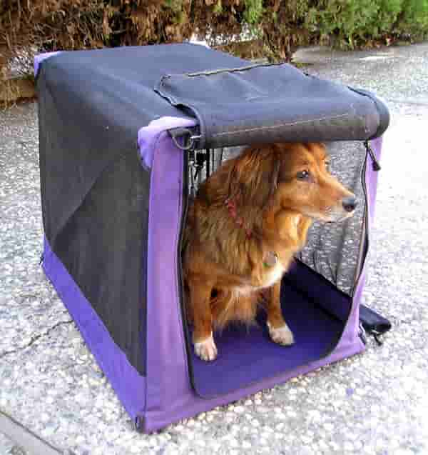 Don't allow visitors to your kennel if you have an outbreak.