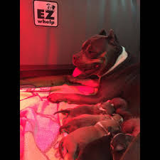 Heat lamps can easily overheat your puppies and mom.