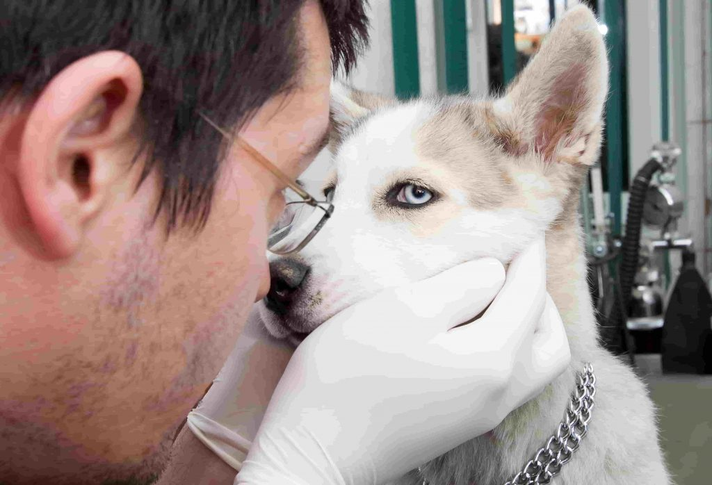 Let your vet and any visitors to your kennel know that you have an outbreak of parvo.