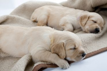 Heating pads keep your puppies warm and safe.