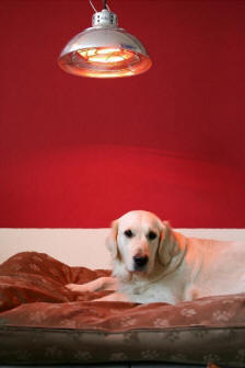 Heat lamps are an excellent way to keep puppies warm.